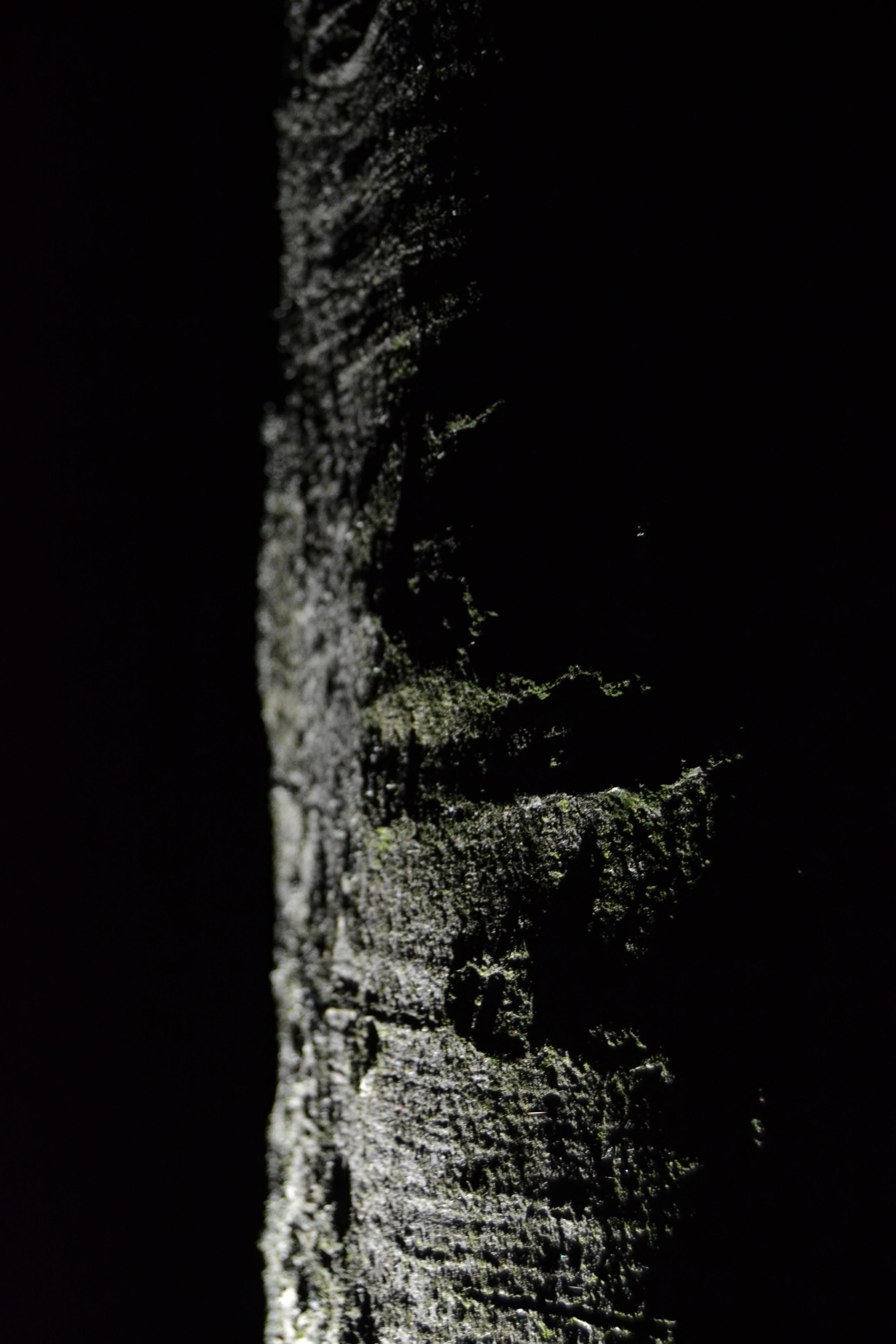 hell und dunkel kontrast krper sehr dunkel gehalten sind silhouetten und die merkmale durch ein. Black Bedroom Furniture Sets. Home Design Ideas